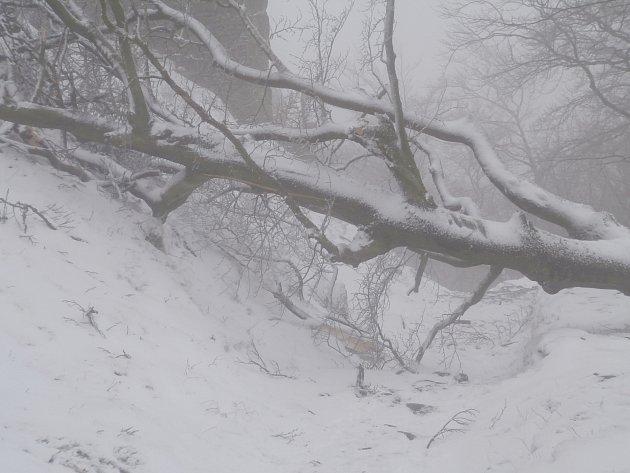 Spadlý strom na cestě k hradu Bezděz.