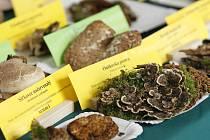 Vlastivědné muzeum společně s ekoporadnou ORSEJ pořádá již tradiční výstavu hub i s mykologickou poradnou. K vidění jsou opravdové rarity.
