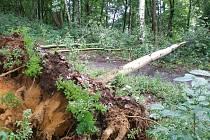 Následky prudké bouřky z minulého týdne si budou ve Stráži pod Ralskem pamatovat dlouho. Až dvoucentimetrové kroupy zasypaly zahrady, vichr vyvracel stromy nejen na sídlišti jako párátka.