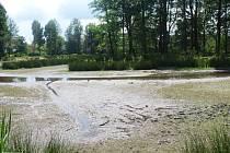 Zámecký rybník v Mimoni nyní připomíná spíše zelenou bažinu. Město čeká na schválení dotace.