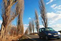 Desítky let lemuje topolová alej silnici z české Lípy na Stružnici. Kvůli bezpečnosti a špatnému stavu by měla být pokácena.