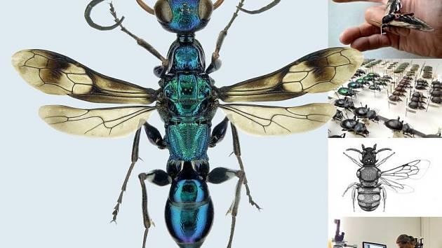 Výstava v českolipském muzeu: Severočeská entomologie — současnost.