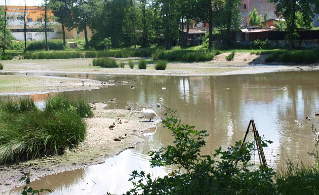 Zámecký rybník vMimoni nyní připomíná spíše zelenou bažinu. Město čeká na schválení dotace.