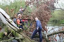 Početná skupina dobrovolníků se sešla, aby uklidila koryto Ploučnice. Odklízel se komunální odpad, ale i popadané stromy.
