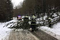 Popadané stromy a nehody zaměstnaly ve středu dobrovolné hasiče ze Zákup.