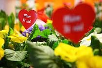 """Velmi různorodá je obliba svátku svatého Valentýna mezi lidmi. Zatímco někteří tomuto """"americkému"""" svátku nechtějí přijít na jméno, jiní vítají svátek zamilovaných jako dobrou příležitost, jak vyjádřit svému protějšku svou náklonnost."""