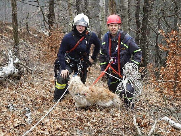 Akce na záchranu psa měla šťastný konec.