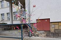 V ulicích Mimoně mohou lidé zdobit břízky.