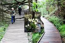 Lesy ČR po ročním úsilí úspěšně dokončily rozsáhlou rekonstrukci turistické stezky v údolí Robečského potoka.