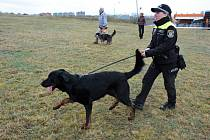 Nejvyšší metu si z Mistrovství světa psů francouzských plemen přivezla Lenka Gahlerová, která pracuje jako psovod u Městské policie v České Lípě. V zaměstnání ji doprovází pes Lancelot (na snímku), služebního plemene beauceron.