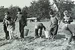 1962. Žáci dubské školy pomáhají zemědělcům. Je to zábava a poznávání práce rodičů.