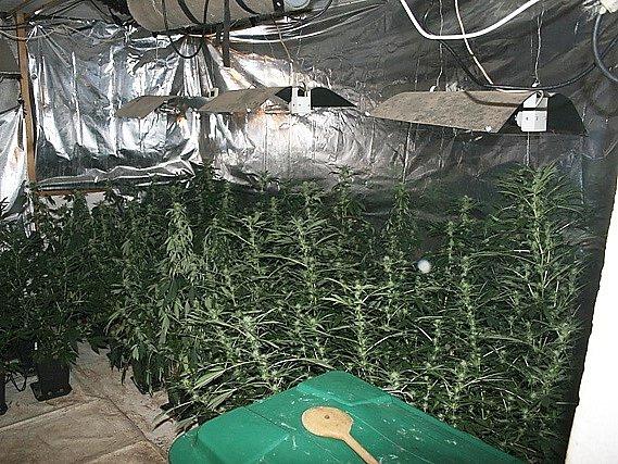 Policisté při domovní prohlídce v závěru minulého týdne  zajistili celkem 187 kusů rostlin.