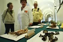Vlastivědné muzeum společně s ekoporadnou ORSEJ pořádá již tradiční výstavu hub i s mykologickou poradnou.