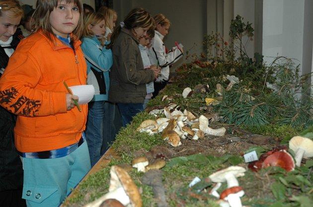 Houby v českolipském muzeu