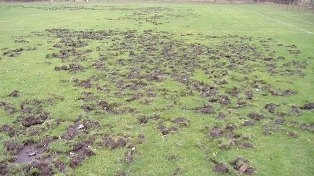 Na hřiště v Novém Oldřichově zavítala nezvaná návštěva. Divoká prasata znemožnila odehrát zápas domácího celku s Kunraticemi.