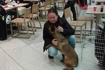 Hana Böhme se svou fenou belgického ovčáka na pražském letišti.