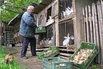 Pro lidi z měst bioodpad, pro obyvatele vesnic cenná surovina. To potvrzuje i chovatel králíků Josef Rouče, který po celé vsi shání tvrdý chléb na krmení.