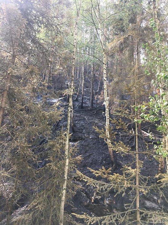 Požár lesa u Hamru na Jezeře.