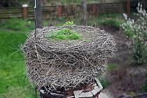 Po letech je hnízdo na pivovarském komíně prázdné.