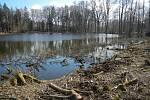 Letos na jaře vyvrcholilo tříleté úsilí Libereckého kraje zlepšit podmínky pro kuňku ohnivou ve dvou přírodních památkách na Českolipsku.
