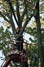 Kvůli silnému větru vyráželi hasiči k popadaným stromům.