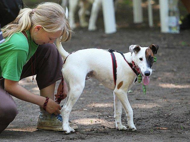 Kde může pes běhat na volno a kde ne, upravuje nová vyhláška.