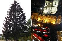 Smrk pro Prahu, který bude symbolem Vánoc na Staroměstském náměstí, rostl 55 až 65 let na pozemku soukromé firmy v České Lípě.
