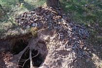 Detektorář v lesním prostoru nalezl bezmála metrák munice.