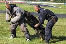Ukázka práce policejních psovodů v rámci Dne s policií na autodromu v Sosnové