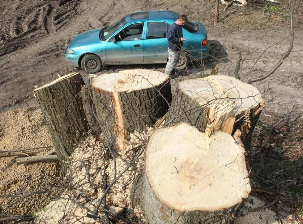 Údajný majitel lesa hledá v telefonu číslo na policii a rázným krokem se blíží k redaktorům Deníku