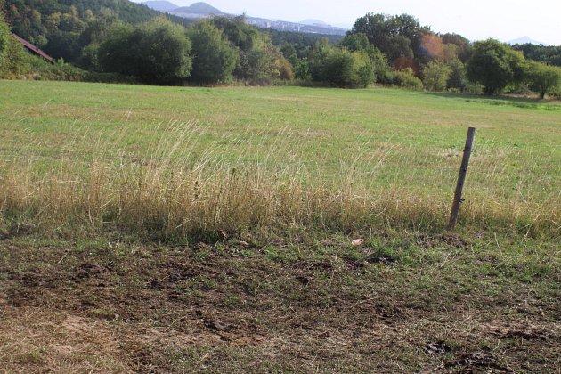 Zloději zastřelili na pastvinách březí krávu.