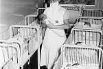 Jedním z novorozeňat na jedinečných fotografiích z porodnice kolem roku 1964 v České Lípě mohl být i tragicky zesnulý Petr Kellner.