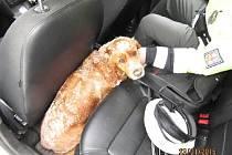 Zmrzlou fenku Jessie nechali policisté ohřát ve svém autě.