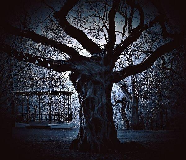 Modrovousův úplněk v českolipském parku.