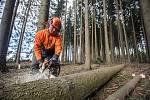 Těžba dřeva - ilustrační foto