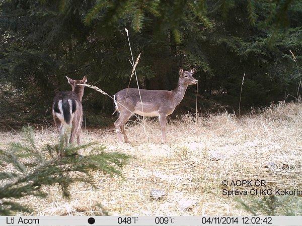 Fotopast pořídila jen vobdobí od 3.do 15.dubna celkem 40fotografií zvířat.