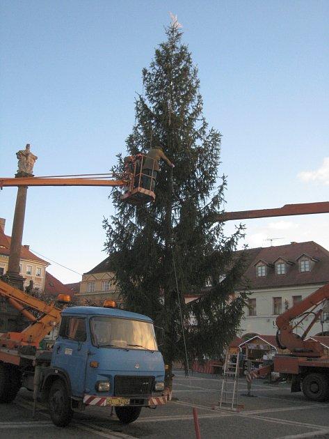 Vánoční strom opět zdobí náměstí vLípě, ikdyž ve zkrácené verzi.