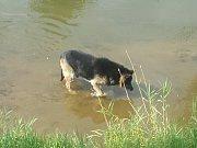 Ženě způsobili krvácející zranění dva psi, kteří na ni zaútočili v ulici U Pískovny v českolipské Dubici.