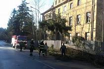 Spadlý strom v Doksech.