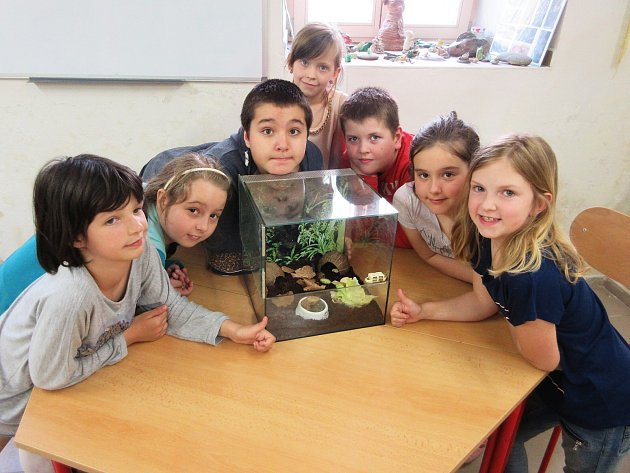 Vchovatelském kroužku Základní školy vDubé mají šváby za mazlíčky.