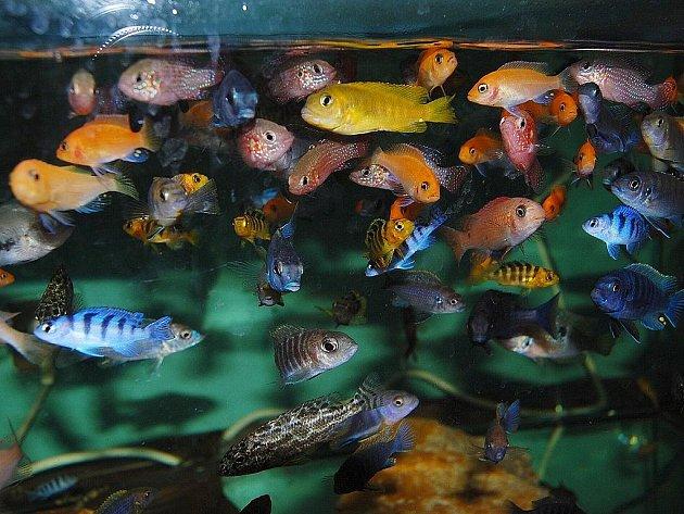 Akvária jsou plná exotických ryb.