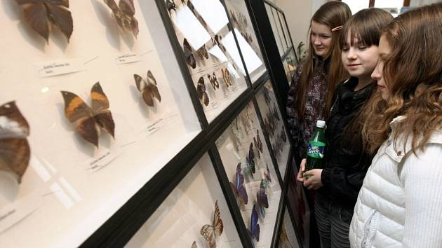 V únoru se dětem představil entomolog – odborník na hmyz. Ilustrační foto.