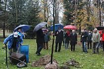 I v letošním roce se bude sázet nový strom.