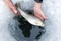 Rybaření v zimě na Českolipsku.
