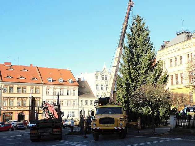 V České Lípě v pondělí usadili vánoční strom.