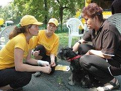 Pojízdná veterinární poradna nabídne bezplatné a bezbolestné vyšetření psích zubů. Ilustrační foto.