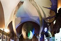 Spodní čelist velryby a maketu zvířete obdivuje v České Lípě už několikátá generace dětí.