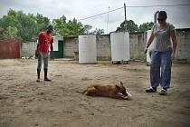 Cvičitelka psů Hana Böhme z Nového Boru připravuje své čtyřnohé svěřence k boji proti pytlákům v Africe.