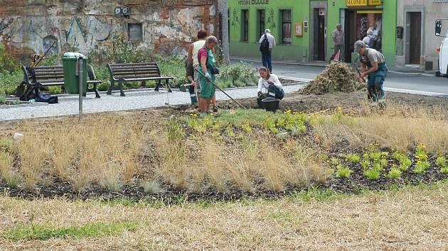 Uschlý a úplně žlutý je v současné době poměrně nedávno založený trávník v upravené proluce Jeřábkova náměstí v centru České Lípy.