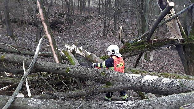 Silný vítr vLibereckém kraji láme stromy. Hasiči vyjeli kdvacítce událostí.